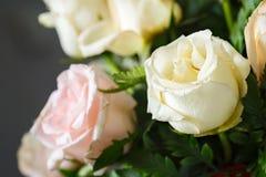 Flores de la rosa del blanco Foto de archivo libre de regalías
