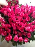 Flores de la rosa del rosa Foto de archivo