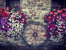 Flores de la rueda N Foto de archivo libre de regalías