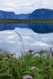 Flores de la selección, acantilados azules Foto de archivo libre de regalías