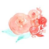 Flores de la tarjeta de felicitación de la acuarela del vector handmade Congratulatio Fotografía de archivo