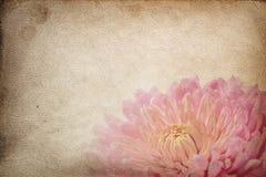 Flores de la vendimia Imagen de archivo