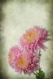 Flores de la vendimia Fotografía de archivo libre de regalías