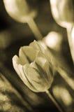 Flores de la vendimia Imagenes de archivo