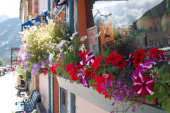 Flores de la ventana Foto de archivo libre de regalías