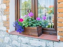 Flores de la ventana en una caja de madera Foto de archivo libre de regalías