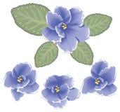Flores de la violeta del vector Foto de archivo libre de regalías