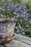 Flores de Laguna del azul de cielo Imagen de archivo libre de regalías