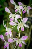 Flores de las orquídeas fotos de archivo libres de regalías