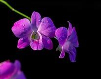 Flores de las orquídeas Foto de archivo