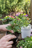 Flores de las plantas Foto de archivo