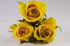 Flores de las rosas amarillas Foto de archivo