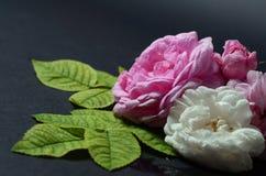 Flores de las rosas en un fondo negro Foto de archivo