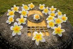Flores de Leelawadee en la huella de Buda Foto de archivo libre de regalías