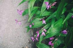 Flores de Lila Fotos de Stock Royalty Free