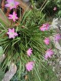 Flores de Lilly Imágenes de archivo libres de regalías