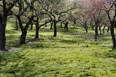 Flores de los árboles en resorte Foto de archivo libre de regalías