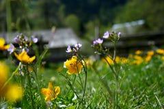 Flores de los campos Imágenes de archivo libres de regalías