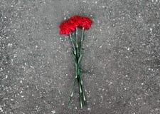 Flores de los claveles Fotografía de archivo libre de regalías
