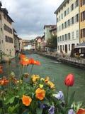 flores de los colores Fotografía de archivo libre de regalías
