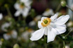 Flores de los colores IX Foto de archivo libre de regalías