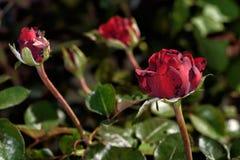 Flores de los colores VIII Imagenes de archivo