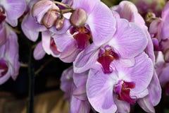 Flores de los colores X Fotografía de archivo