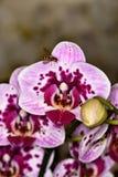 Flores de los colores XI Fotos de archivo