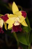 Flores de los colores XII Foto de archivo libre de regalías