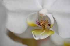 Flores de los colores XIV Imagen de archivo libre de regalías