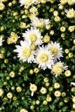 Flores de los colores XIX Fotos de archivo