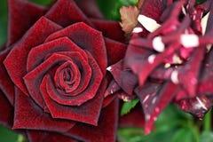 Flores de los colores XV Fotografía de archivo libre de regalías
