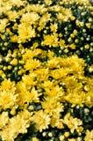 Flores de los colores XX Imagen de archivo libre de regalías