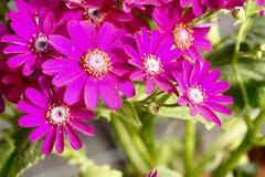 Flores de los floristas Foto de archivo libre de regalías