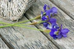 Flores de los iris Imagenes de archivo