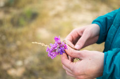Flores de los llanos Imágenes de archivo libres de regalías