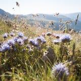 Flores de los Pirineos Imágenes de archivo libres de regalías