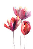Flores de los tulipanes Imágenes de archivo libres de regalías
