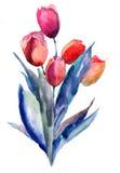 Flores de los tulipanes Imagen de archivo libre de regalías