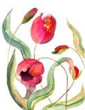 Flores de los tulipanes Fotografía de archivo