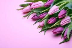 Flores de los tulipanes de la primavera en rosa fotografía de archivo libre de regalías