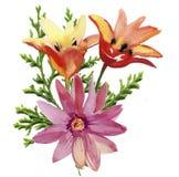 Flores de los tulipanes Ejemplo de la acuarela para su Imagen de archivo libre de regalías