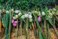 Flores de loto de ofrecimiento en un templo budista Imágenes de archivo libres de regalías