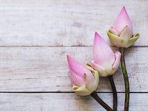 Flores de loto rosadas en la tabla de madera azul fotografía de archivo libre de regalías