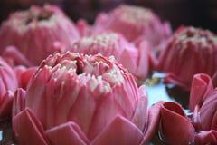 Flores de loto rosadas flotantes Imagenes de archivo