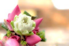 Flores de loto rosado y blanco frescas para la adoración en un templo viejo Imagen de archivo libre de regalías