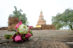 Flores de loto rosado y blanco frescas para la adoración en un templo viejo Fotos de archivo
