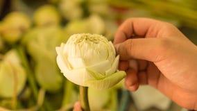 Flores de Lotus - flores de lótus brancos nas mãos da mulher Fotos de Stock Royalty Free