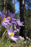 Flores de madera. Foto de archivo