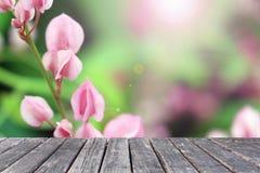 Flores de madera de Antigonon Leptopus de la tabla Imágenes de archivo libres de regalías